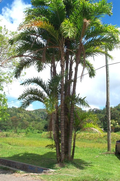 "Search Results for ""Home Menu Template"" – Calendar 2015"